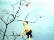 Драмы науки: зачем Ньютону яблоко?