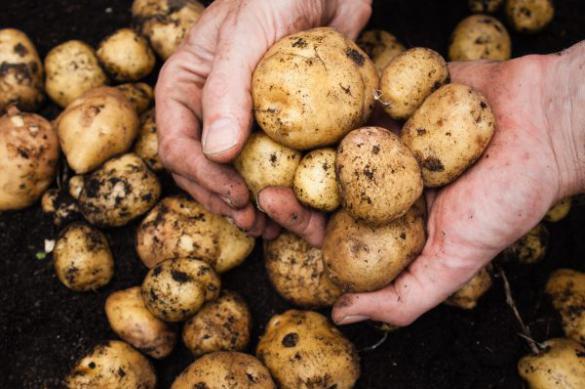Молодая картошка в октябре? Почему бы и нет!