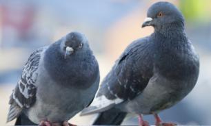 Жителям Магадана не будут запрещать кормить голубей