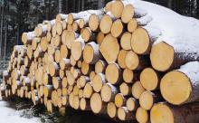 Спикер Совфеда предложила запретить экспорт леса