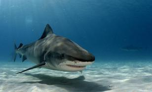 """Кинематографисты выяснили, как акулы относятся к """"death-метал"""""""