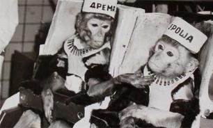 Как обезьяны стали космонавтами