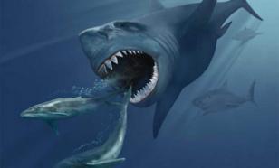 В Приморье акула и охотник не поделили добычу