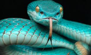"""""""Элементарно, Уотсон! Змеи-то было две!"""" Что Конан Дойл не знал про змей?"""