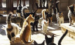 Кто на Кипре хозяин? Кошка!