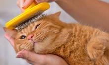 Правильный уход за шерстью кошки