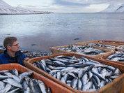 Канадская рыба может быть заражена кишечной палочкой
