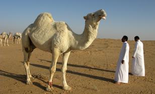 Города Саудовской Аравии, которые стоит посетить