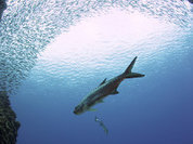 Атланты жили на Багамских островах