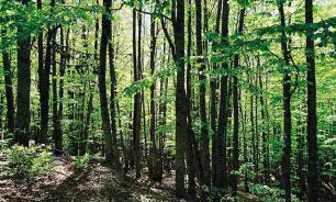 В лесах Урала потерялись четыре человека