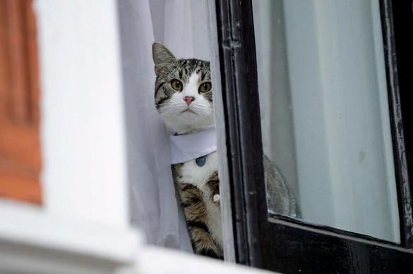 Крупнейшее в Европе кошачье кафе открылось в Петербурге