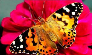 Дом порхающих бабочек
