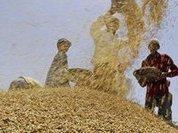 Фермеров РФ увлек мировой рынок органики