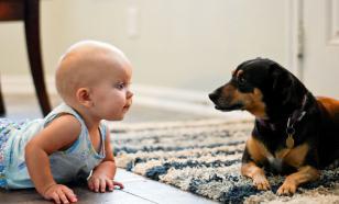 Младенец и питомец: руководство для новоиспеченных родителей