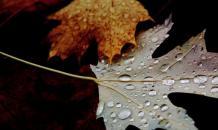 Ноябрь обещает звездную динамику - Астрология месяца