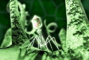 Бактерии используют биологическое оружие