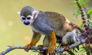 Антропологи нашли останки обезьяны, жившей 12,5 миллиона лет назад