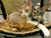 Любимые кошки пророка Мухаммада