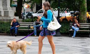 Как провести вакцинацию собаки правильно