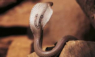 Плащ-невидимка, спасающий от змей