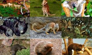 Редкие животные Австралии