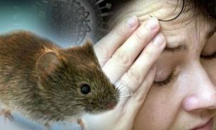 Роспотребнадзор: дачникам грозит мышиная лихорадка