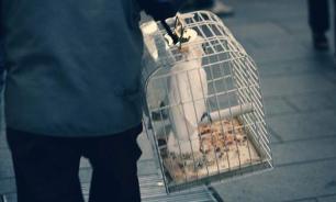 Правила перевозки птиц в самолете
