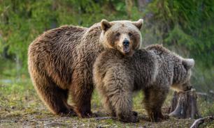 С начала года на Камчатке застрелили около 60 медведей