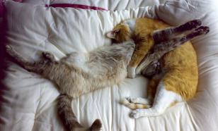 Почему коты так много спят?