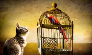 Кошка и птица: как содержать вместе