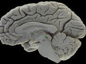"""Ученые """"подглядывают"""" за мыслями"""