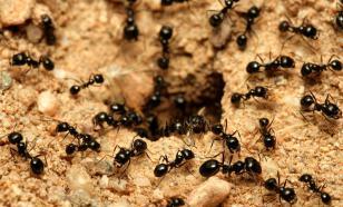Лучшие способы для борьбы с муравьями на дачном участке