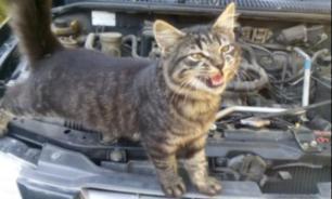 Во Владивостоке водитель нашел под капотом котенка