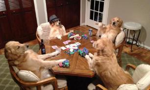 Как отучить собаку портить вещи