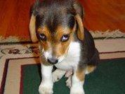 Собака никогда не сочтет себя виноватой