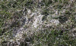 Предупреждение болезней газонов