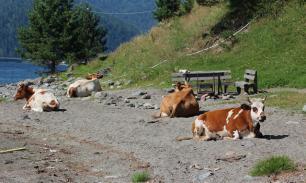 Мелких фермеров спасет только кооперация