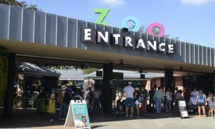 Шимпанзе в зоопарке Хьюстона спровоцировала эвакуацию