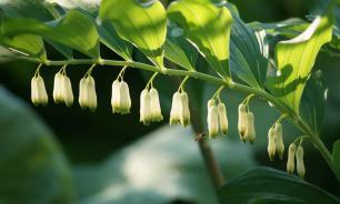 Растения тоже любят поболтать