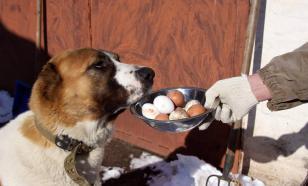 Можно ли давать собаке яйца