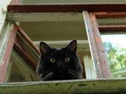 Суд наказал кошку за свободолюбие