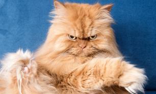 Задолжавший банку 120 тыс. мужчина предложил приставам арестовать его кота