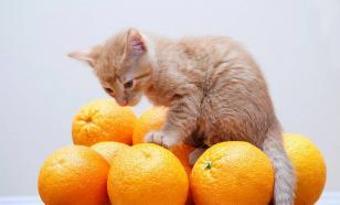 Витамины для котят: как и какие давать