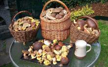 Госдума обсудит правила сбора грибов и ягод