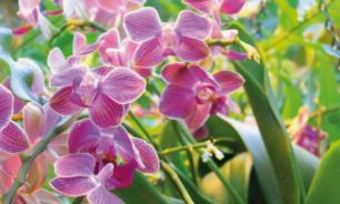 Ваша первая орхидея: от простого к сложному