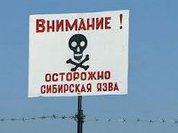 На Алтае пытаются предотвратить эпидемию