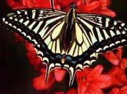 На Урале открылся парк экзотических бабочек