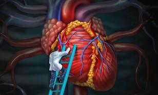 Российские врачи научились хранить донорское сердце 24 часа