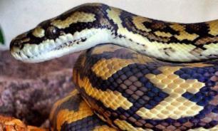 Три вида змей, которых можно держать дома