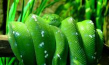 Четыре вида змей, которых можно держать дома